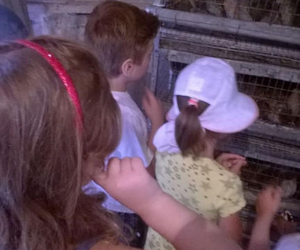 """Детский садик """"Аистенок"""" на птичьем дворе"""